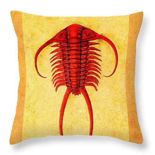 Trilobite Throw Pillow featuring the photograph Paraceraurus Fossil Trilobite by Melissa A Benson