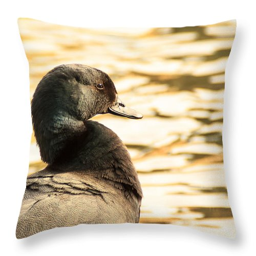 Paradise Duck Drake Pond Wildlife Water Ripples Pattern Feathers Bird Avian Throw Pillow featuring the photograph Paradise by Wayne Winder