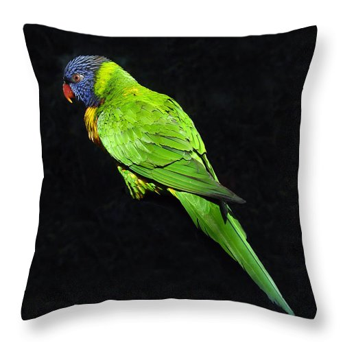 Parrot Throw Pillow featuring the photograph Parrot In Black by David Lee Thompson