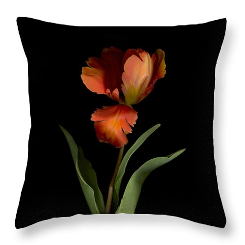 Garden Throw Pillow featuring the photograph Parrot Tulip by Sandi F Hutchins