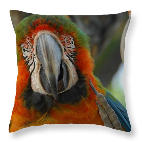 Parrot Throw Pillow featuring the photograph Parroting Information by Donna Blackhall