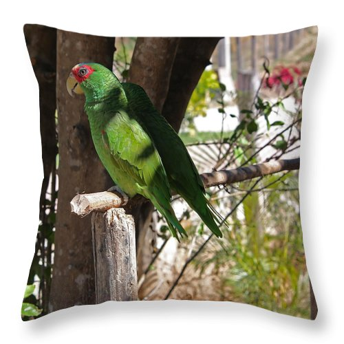 Parrot Throw Pillow featuring the photograph Parrots. by Robert Rodda