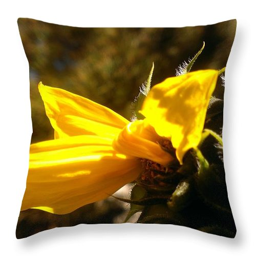Sunflower Throw Pillow featuring the photograph Partial by LKB Art and Photography