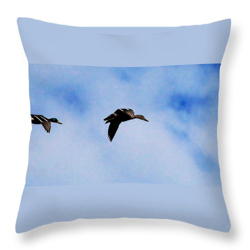Digital Photography Throw Pillow featuring the photograph Partners by David Lane