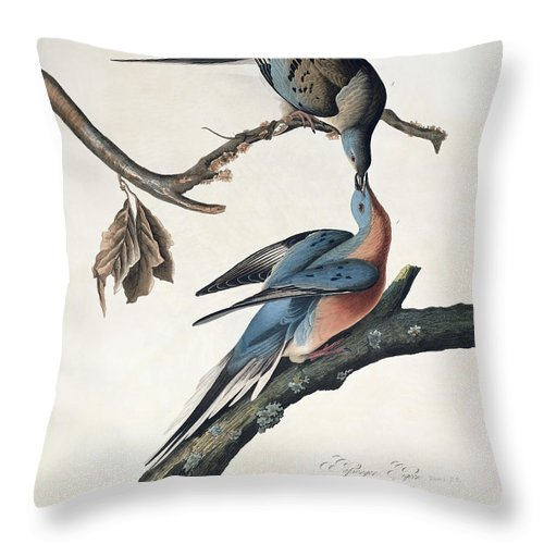 Passenger Pigeon Throw Pillow featuring the drawing Passenger Pigeon by John James Audubon