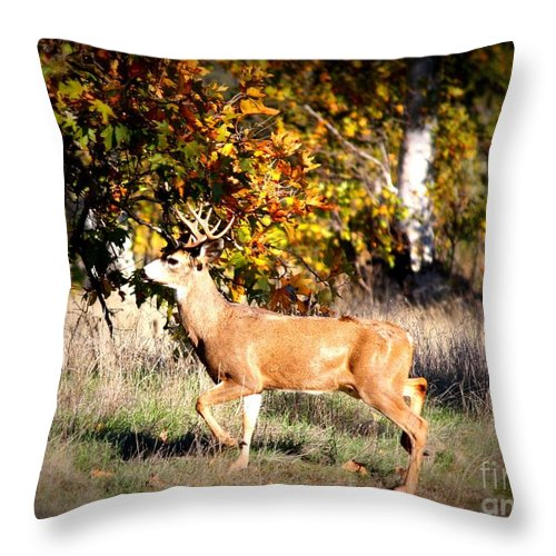 Animal Throw Pillow featuring the photograph Passing Buck In Autumn Field by Carol Groenen