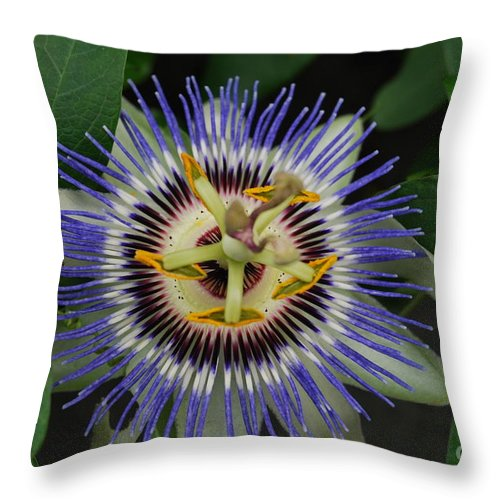 Passion Flowers Throw Pillow featuring the pyrography Passion Bloom Vi by Nigel Jeremiah