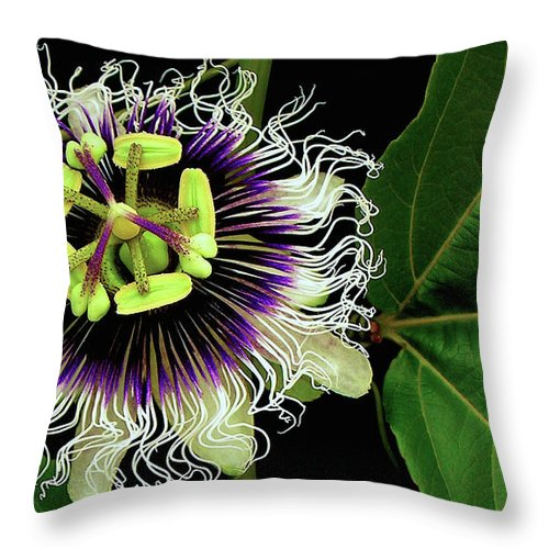 Hawaii Iphone Cases Throw Pillow featuring the photograph Passion Flower by James Temple
