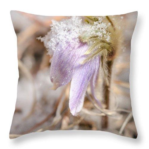 Dakota Throw Pillow featuring the photograph Past Pasque by Dakota Light Photography By Dakota