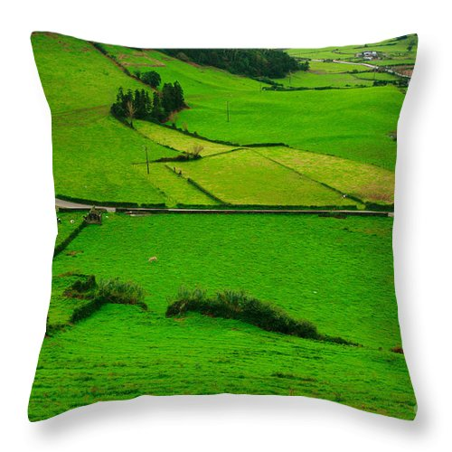 Dairy Throw Pillow featuring the photograph Pastures In The Azores by Gaspar Avila