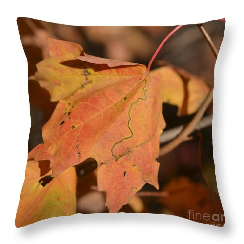 Maple Leaf Throw Pillow featuring the photograph Path Through A Leaf by Alana Boltwood