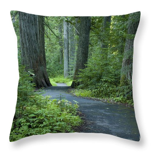 Grove Throw Pillow featuring the photograph Path Through The Cedars by Idaho Scenic Images Linda Lantzy