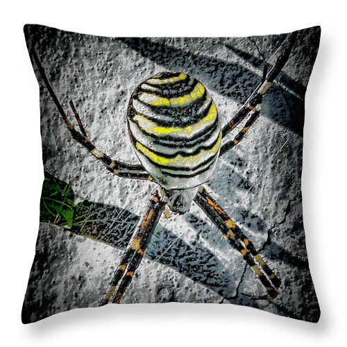 Patience Throw Pillow featuring the photograph Patience Is A Virtue by Mimulux patricia No