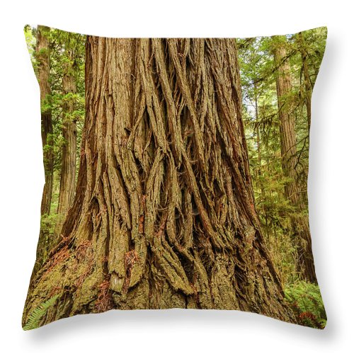 Redwoods Throw Pillow featuring the photograph Patterned Redwood by George Herbert
