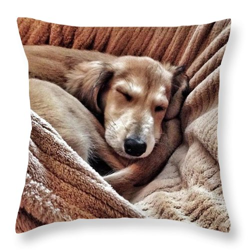 Persiangreyhound Throw Pillow featuring the photograph Peace At Last #saluki by John Edwards