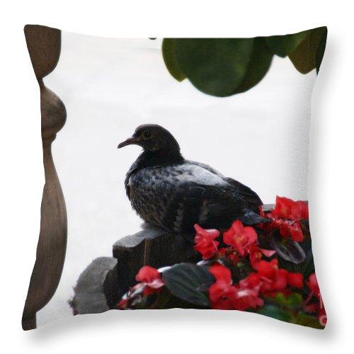 Bird Throw Pillow featuring the photograph Peaceful Garden by Linda Shafer