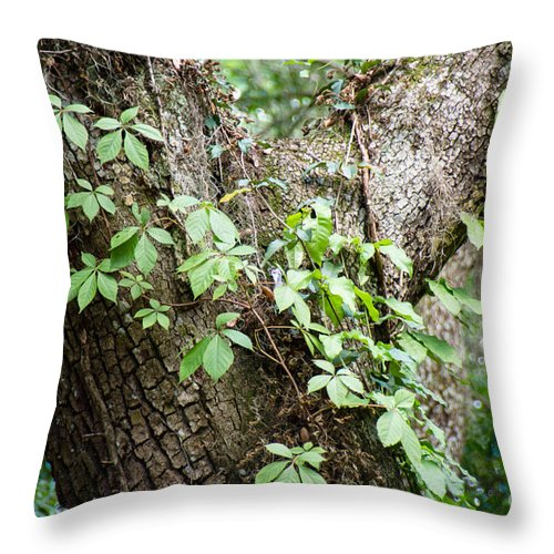 Season Throw Pillow featuring the photograph Peaceful Place by Andrea Anderegg