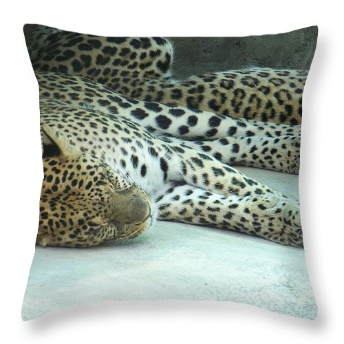 Chetah Throw Pillow featuring the photograph Peaceful Sleep by Laurie Paci