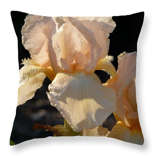 Flower. Iris Throw Pillow featuring the photograph Peach Bearded Iris by Ruth Kamenev