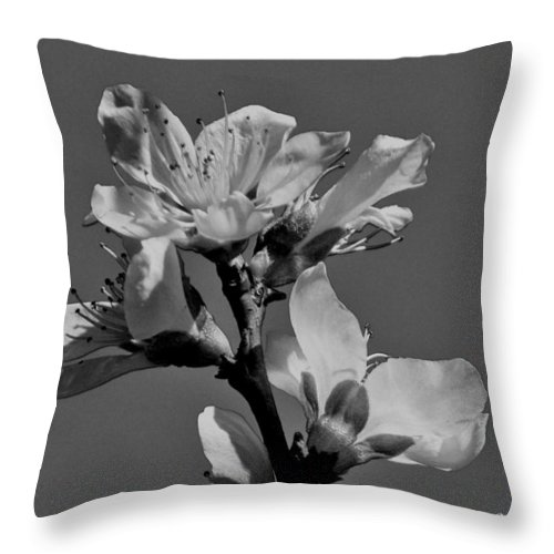 Peach Throw Pillow featuring the photograph Peach Blossoms In Grayscale by Betty Northcutt