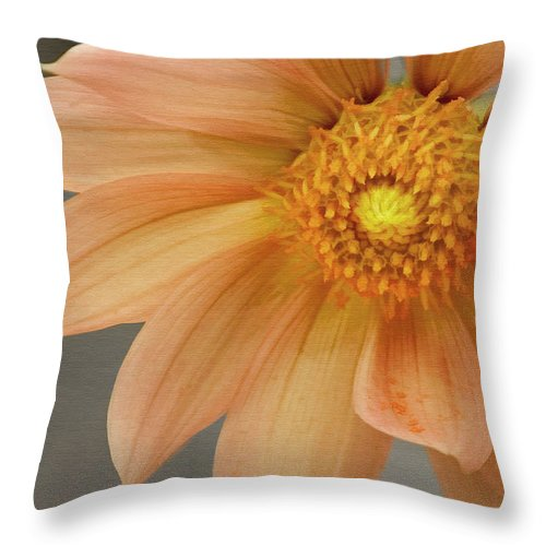 Floral Throw Pillow featuring the photograph Peach Dahlia by Sharon Foster