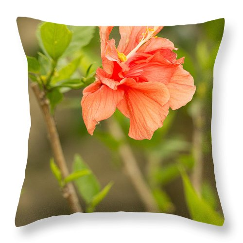 Flowers Throw Pillow featuring the photograph Peach Hibiscus by Beverly Tabet