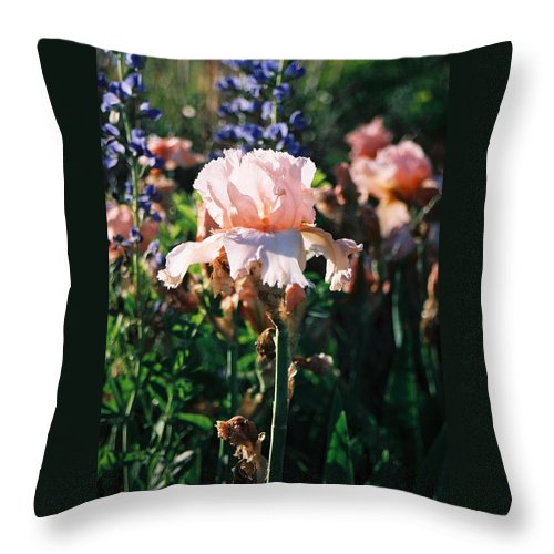 Flower Throw Pillow featuring the photograph Peach Iris by Steve Karol