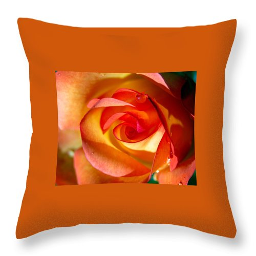 Rose Throw Pillow featuring the photograph Peach Rose by Amy Fose