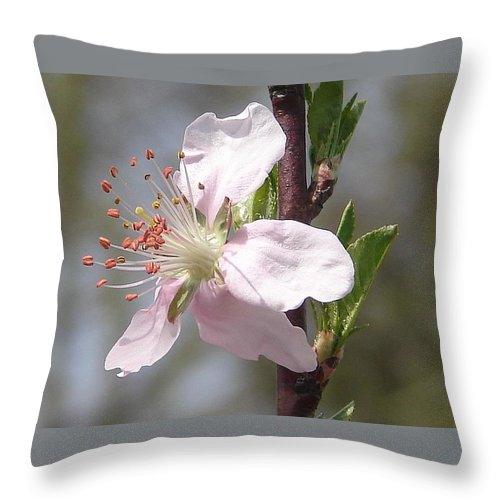 Pink Tree Branch Green Leaves Throw Pillow featuring the photograph Peach Tree 2 by Luciana Seymour