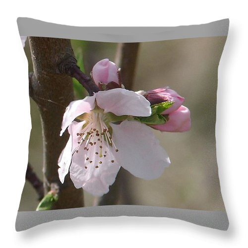 Pink Tree Branch Green Leaves Throw Pillow featuring the photograph Peach Tree 3 by Luciana Seymour