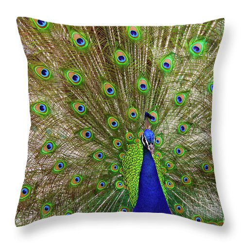 Peacock Throw Pillow featuring the photograph Peacock 1 by Dean Triolo