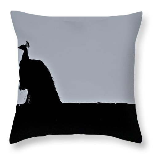Peacock Throw Pillow featuring the photograph Peacock at Night by Douglas Barnett
