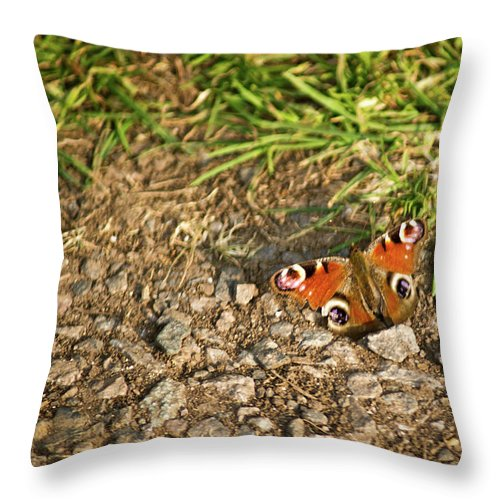 Peacock Throw Pillow featuring the photograph Peacock Butterfly by Douglas Barnett