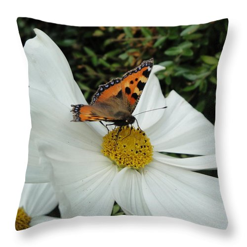 Butterfly Throw Pillow featuring the photograph Peacock Butterfly On Cosmos by Susan Baker