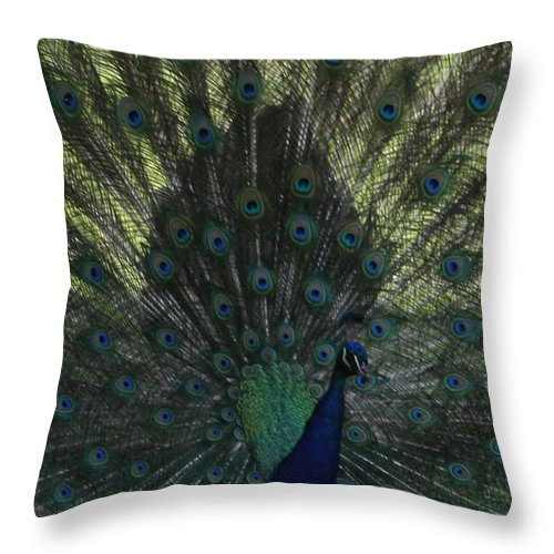 Peacock Throw Pillow featuring the photograph Peacock Eyes by Michelle Miron-Rebbe