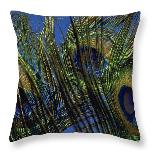 Feather Throw Pillow featuring the photograph Peacock Feathers by Michael Mogensen