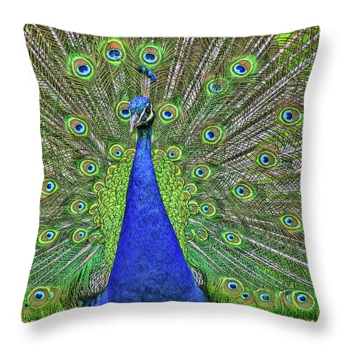Oak Glen Throw Pillow featuring the photograph Peacock In A Oak Glen Autumn 3 by Tommy Anderson