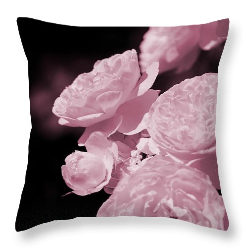 """Peacock Pink Cabbage Roses On Black"" Fine Art Photography on Throw Pillow"