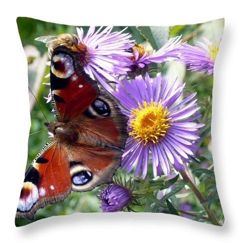 Peacock Throw Pillow featuring the photograph Peacock With Bee by Helmut Rottler