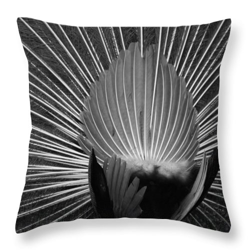 Macro Throw Pillow featuring the photograph Peacocks Ass Original by Rob Hans