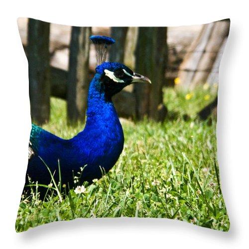 Peafowl Throw Pillow featuring the photograph Peafowl Eye to Eye by Douglas Barnett