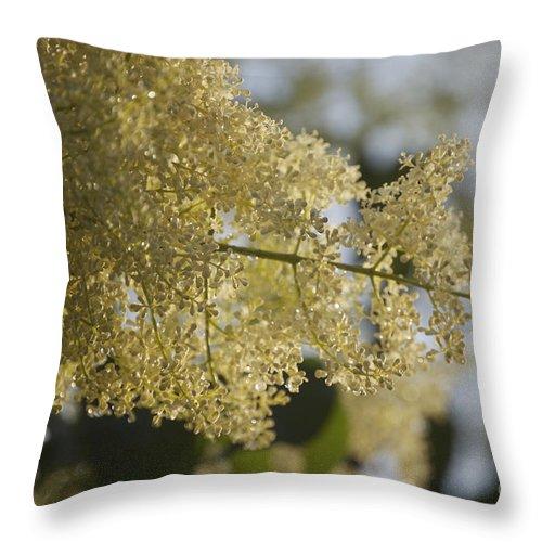 Pear Throw Pillow featuring the photograph Pear Blossom by Faith Harron Boudreau