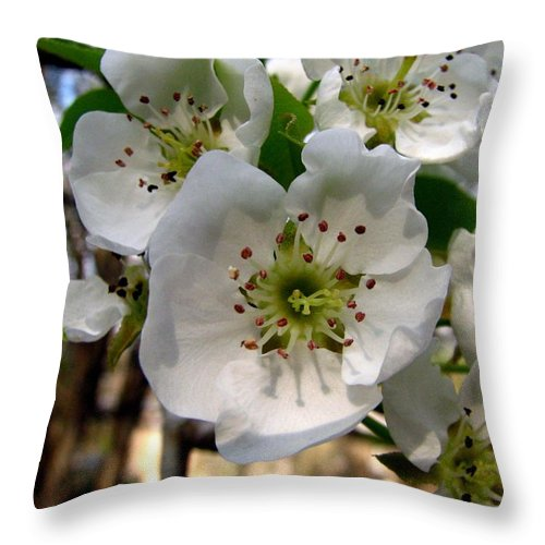 Pear Tree Blossum Throw Pillow featuring the photograph Pear Tree Blossoms 3 by J M Farris Photography