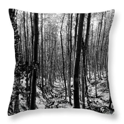 Pecos National Forest Throw Pillow featuring the photograph Pecos Wilderness by David Lee Thompson