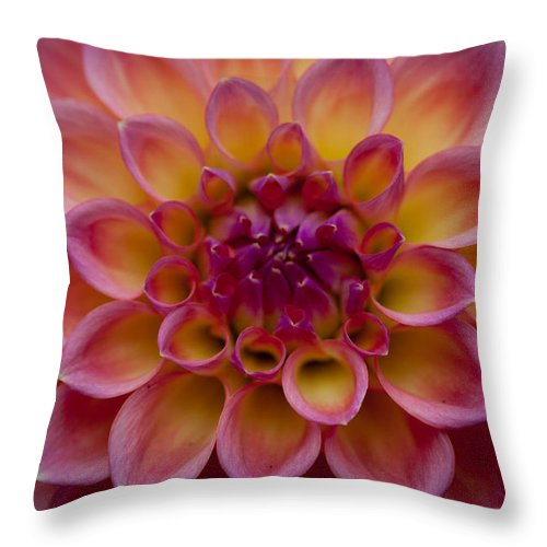 Flower Throw Pillow featuring the photograph Pedal View by Paul Slebodnick