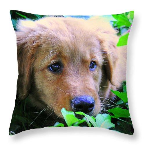 Golden Retriever Throw Pillow featuring the photograph Peek-a-boo by Andrew Webb