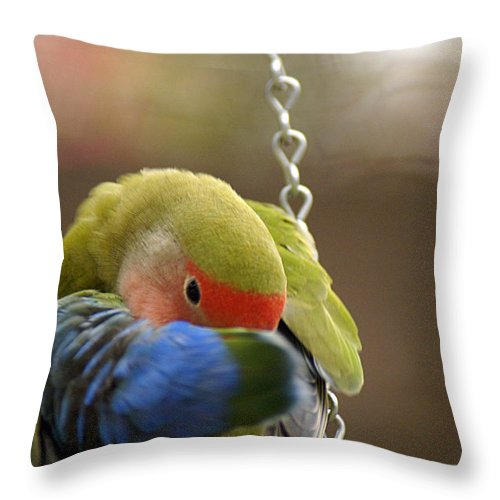 Clay Throw Pillow featuring the photograph Peek A Boo by Clayton Bruster