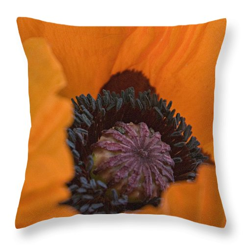 Orange Throw Pillow featuring the digital art Peek A Boo by Jacqueline Milner
