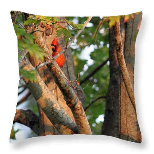 Red Throw Pillow featuring the photograph Peek-aboo by Suzanne Gaff