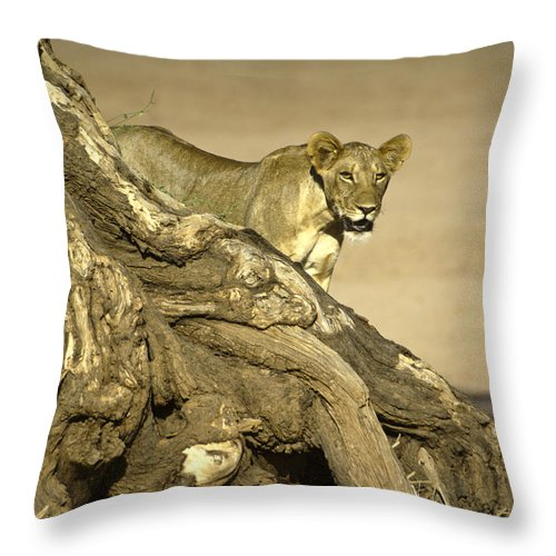 Africa Throw Pillow featuring the photograph Peeking Out by Michele Burgess